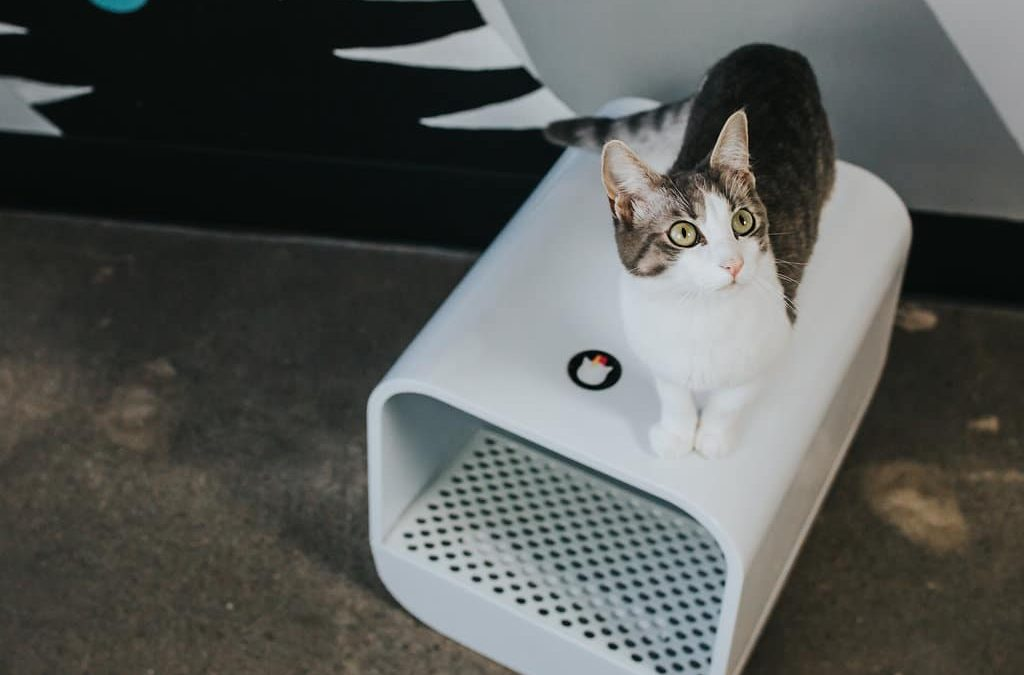 Cats Do Their Business In Style With Grand Poobox